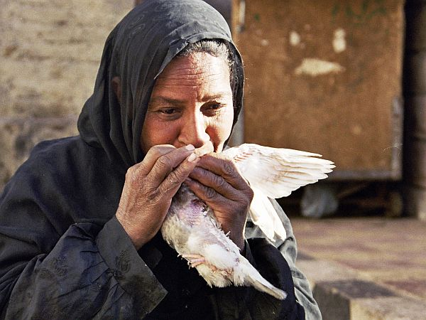 Na targu. Kobieta poi osłabionego gołębia