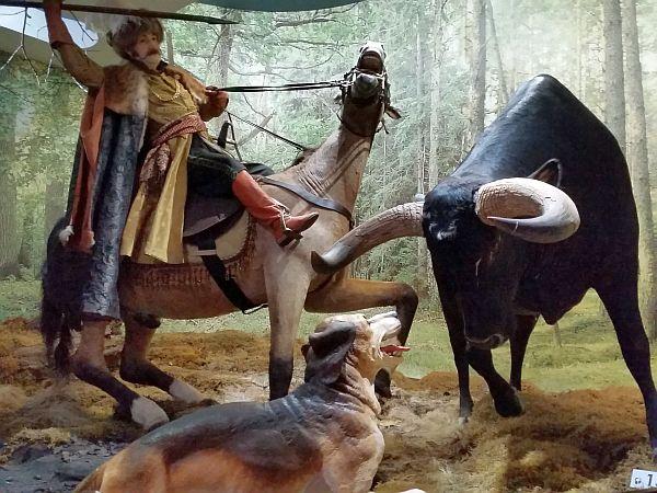 Muzeum Przyrody pokazuje historię Puszczy Białowieskiej