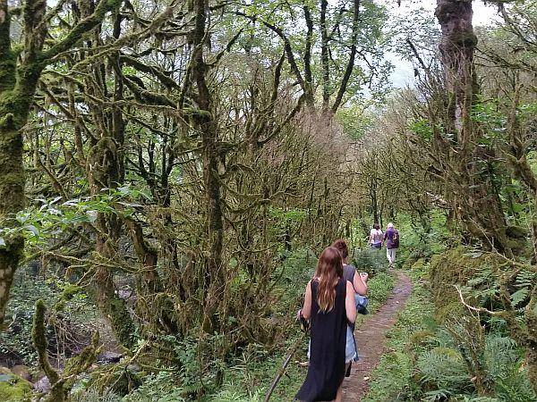 Wyjątkowo wilgotny las w jednym z parków Adżarii